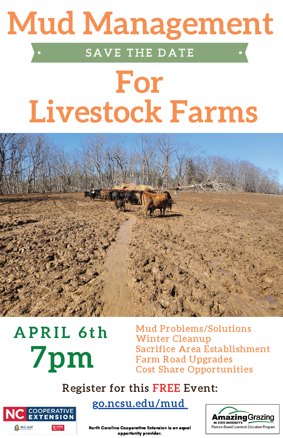 Cattle in muddy field