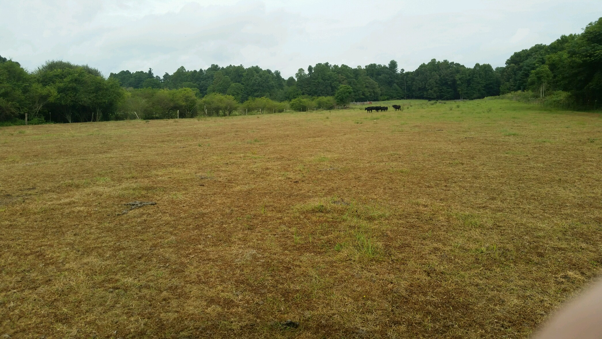 Pasture infected by fall armyworms