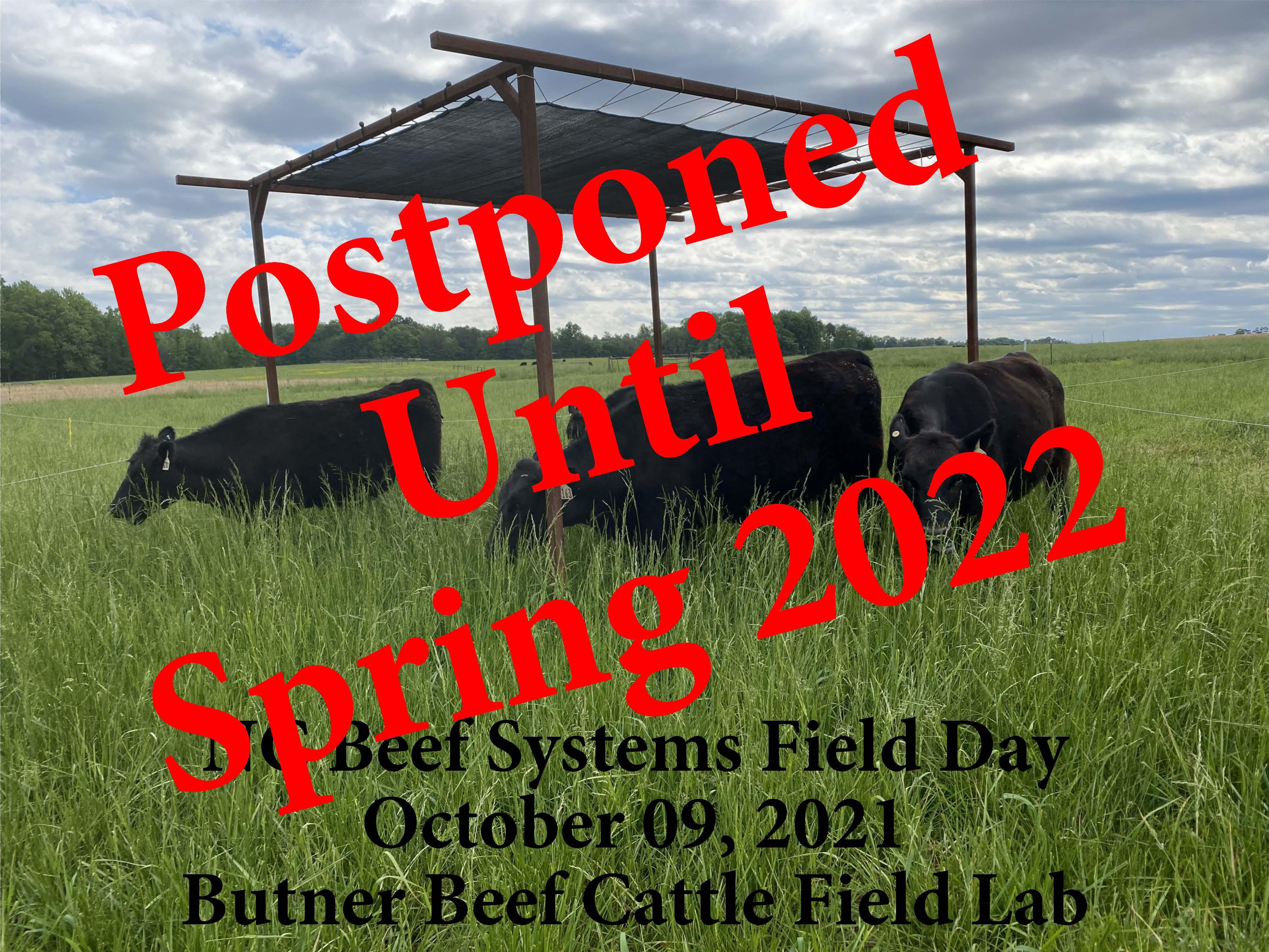 Livestock grazing in field